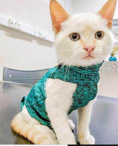 6 de outubro de 2020 - Castração: fazer ou não? Essa é uma escolha do tutor, mas não se pode negar que o procedimento traz diversos benefícios para a qualidade de vida dos animais.