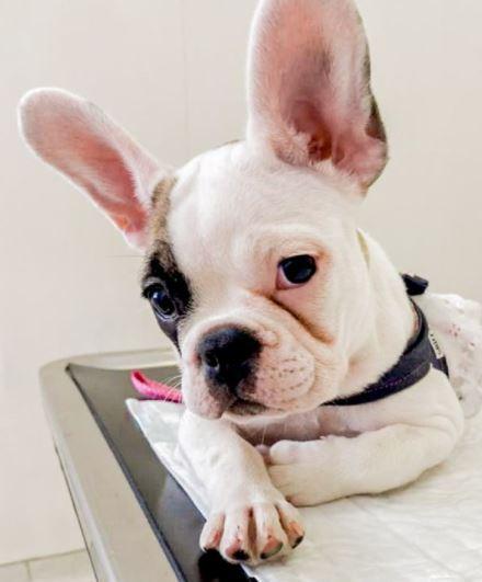 consulta filhote - Frida: consulta filhote Pet Care