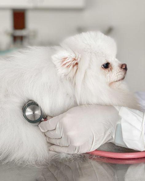 exame esculta do coracao - A importância dos check-ups em cães e gatos