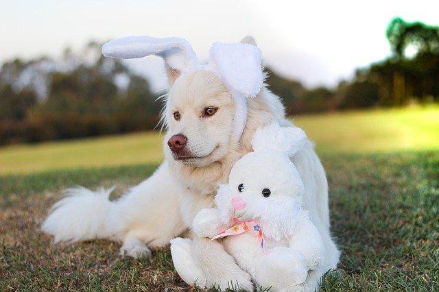 puppy 2208365 640 - Não dê chocolates para seu cão! Intoxicação por metilxantinas