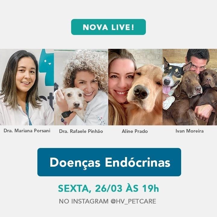 whatsapp image 2021 03 19 at 16 53 11 - Live: Você sabia que os animais também podem ter problemas endócrinos?