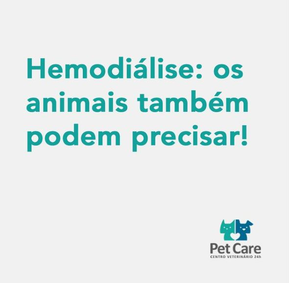 hemodialise - Hemodiálise os animais também podem precisar!