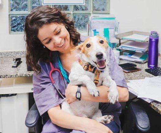 spark - Spark: história de adoção de cachorro
