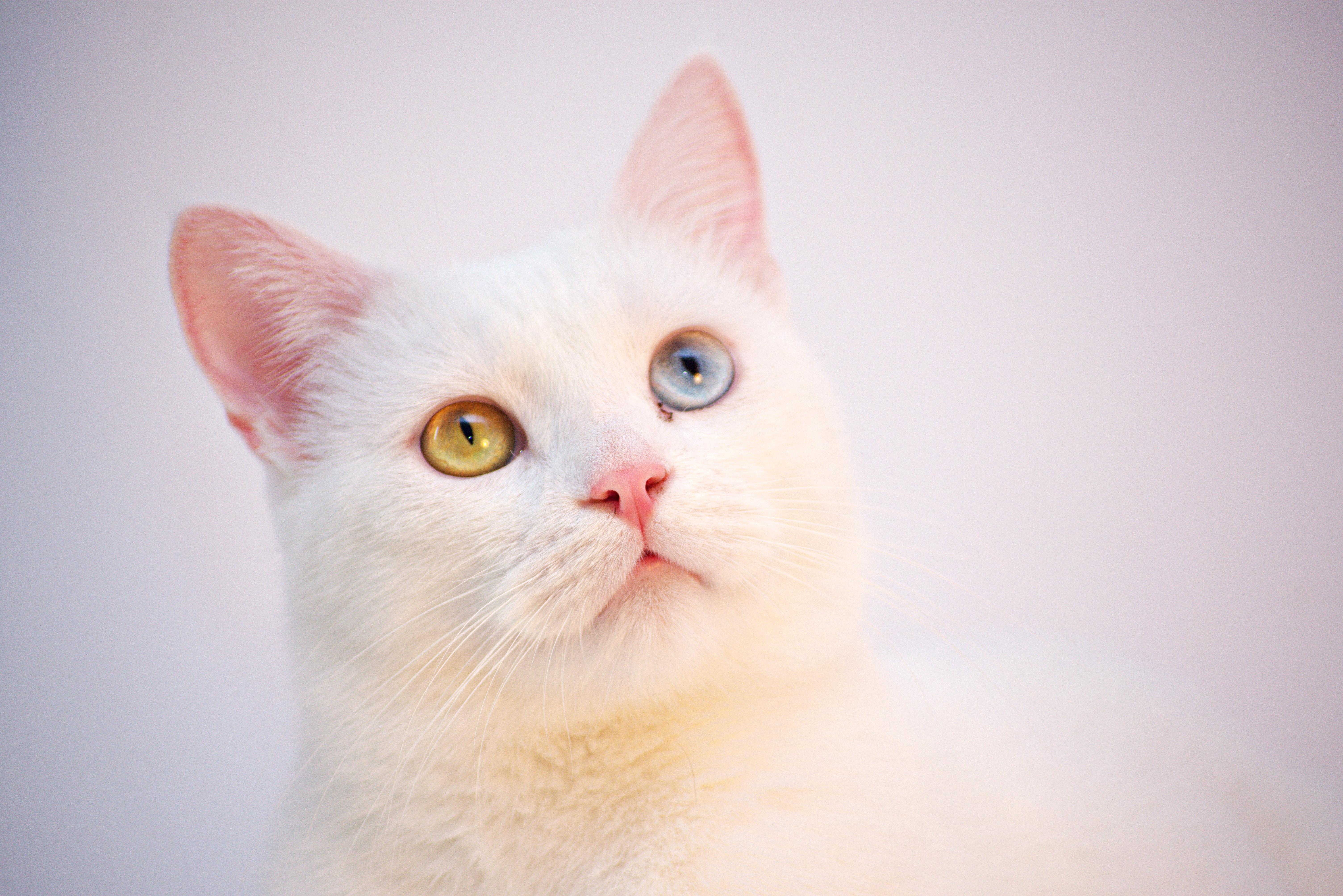 pexels dids 1302290 - Check-up em gatos para prevenira Doença Renal Crônica