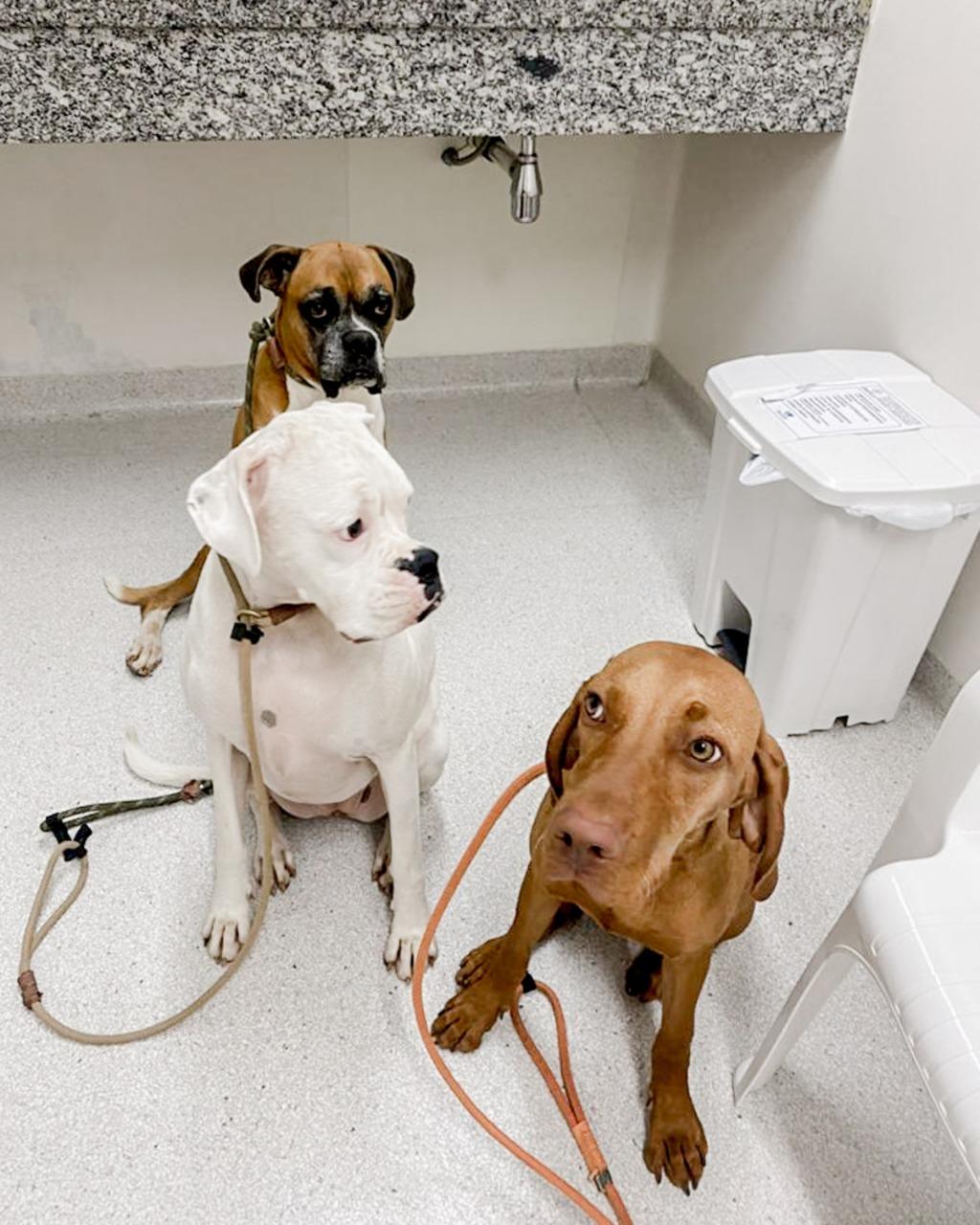 whatsapp image 2021 04 06 at 15 28 38 1 - Vacinação e saúde animal