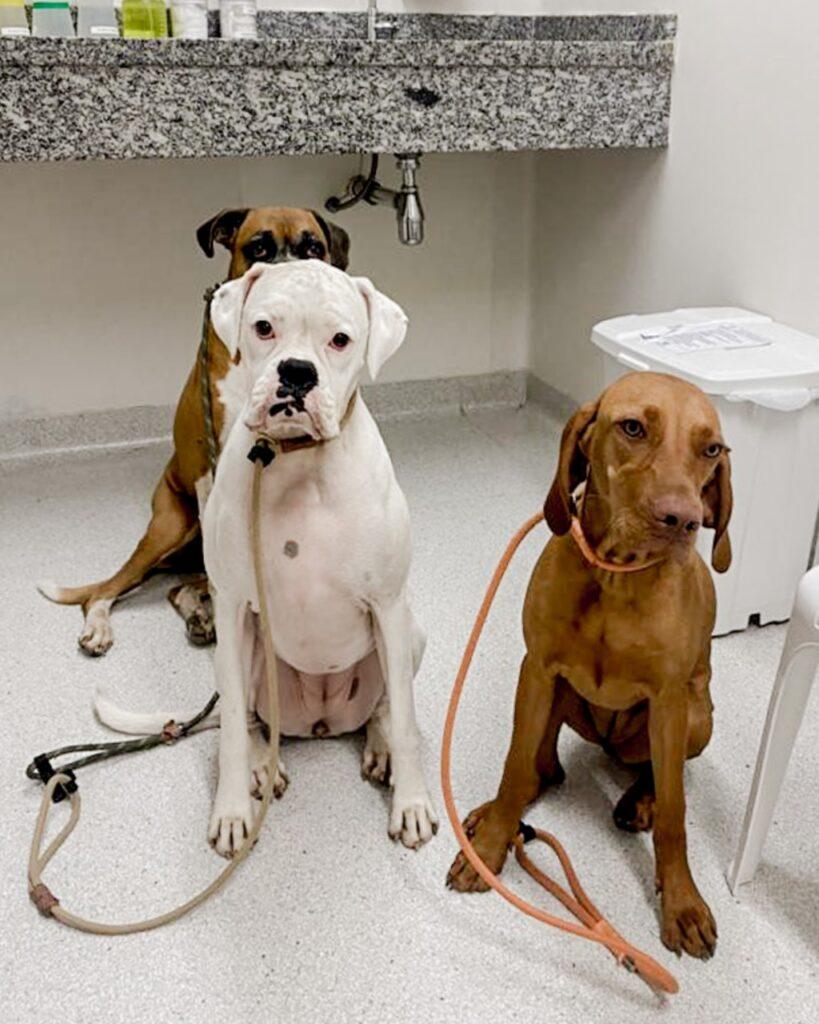 whatsapp image 2021 04 06 at 15 28 38 819x1024 - Vacinação e saúde animal