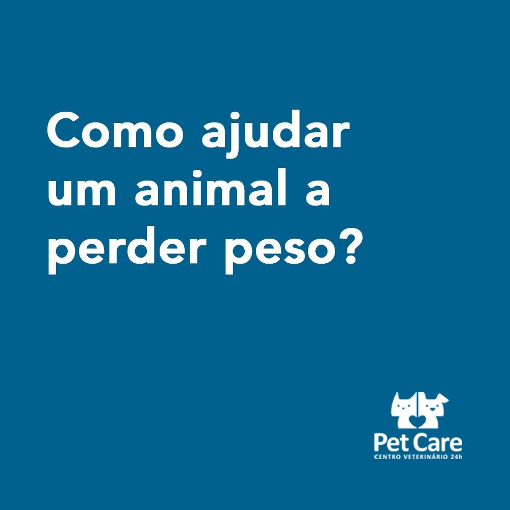whatsapp image 2021 04 06 at 15 29 16 - Como ajudar um animal a perder peso?
