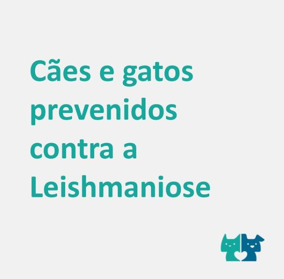 leishmaniose - Você conhece a Leishmaniose?