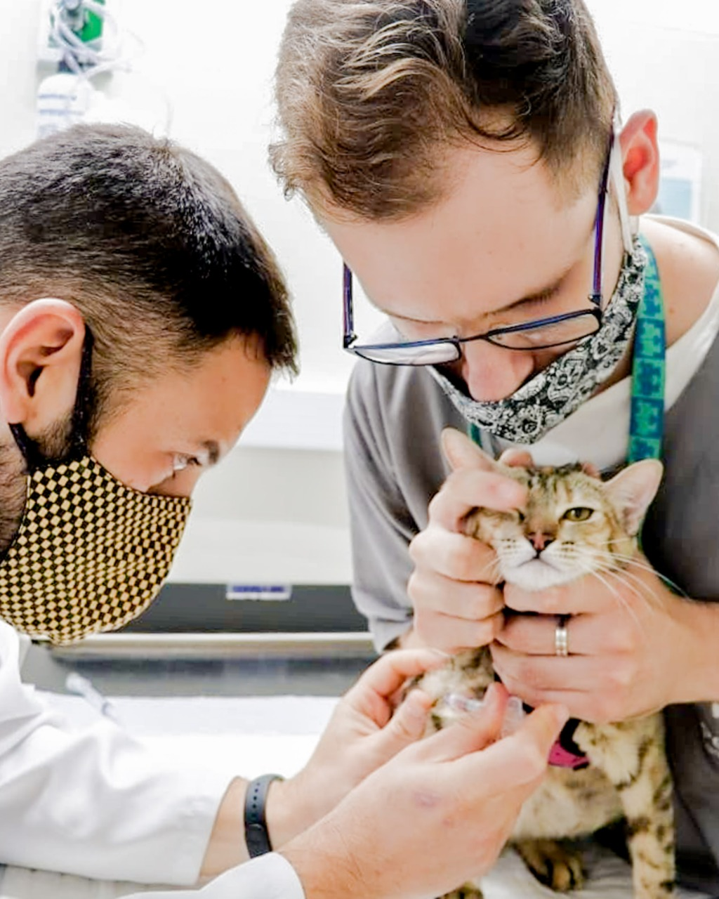 whatsapp image 2021 04 30 at 19 01 46 - Informações importantes sobre vacinação de gatos e cachorros adultos.
