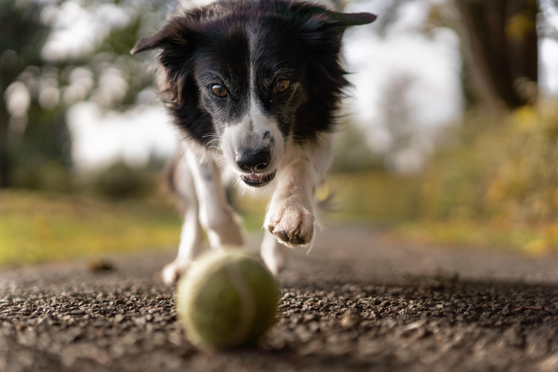 pexels alois moubax 1562983 - Como identificar e diagnosticar a osteoartrite canina?