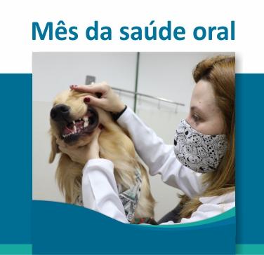 baner site mobile saude oral - A importância do tratamento periodontal em cães e gatos