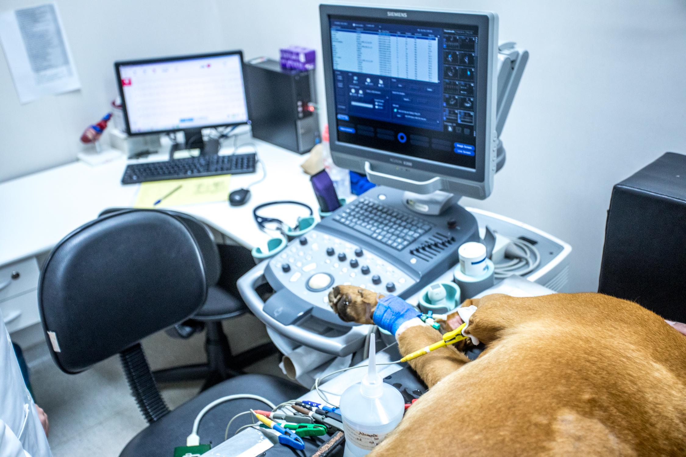 eletro - Doenças do coração em cães
