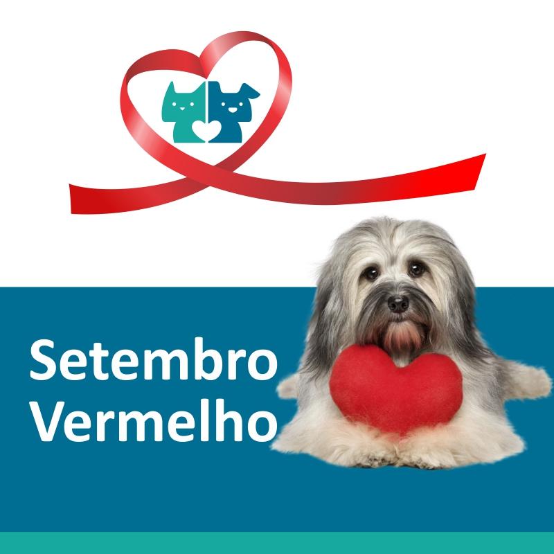 post setembro vermelho petcare - Setembro Vermelho: Doenças do coração em cães e gatos