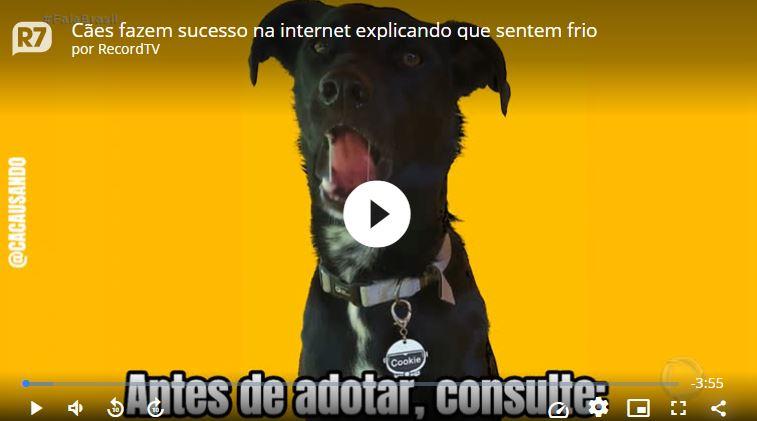 """video - Cães fazem sucesso na internet """"explicando"""" que sentem frio"""