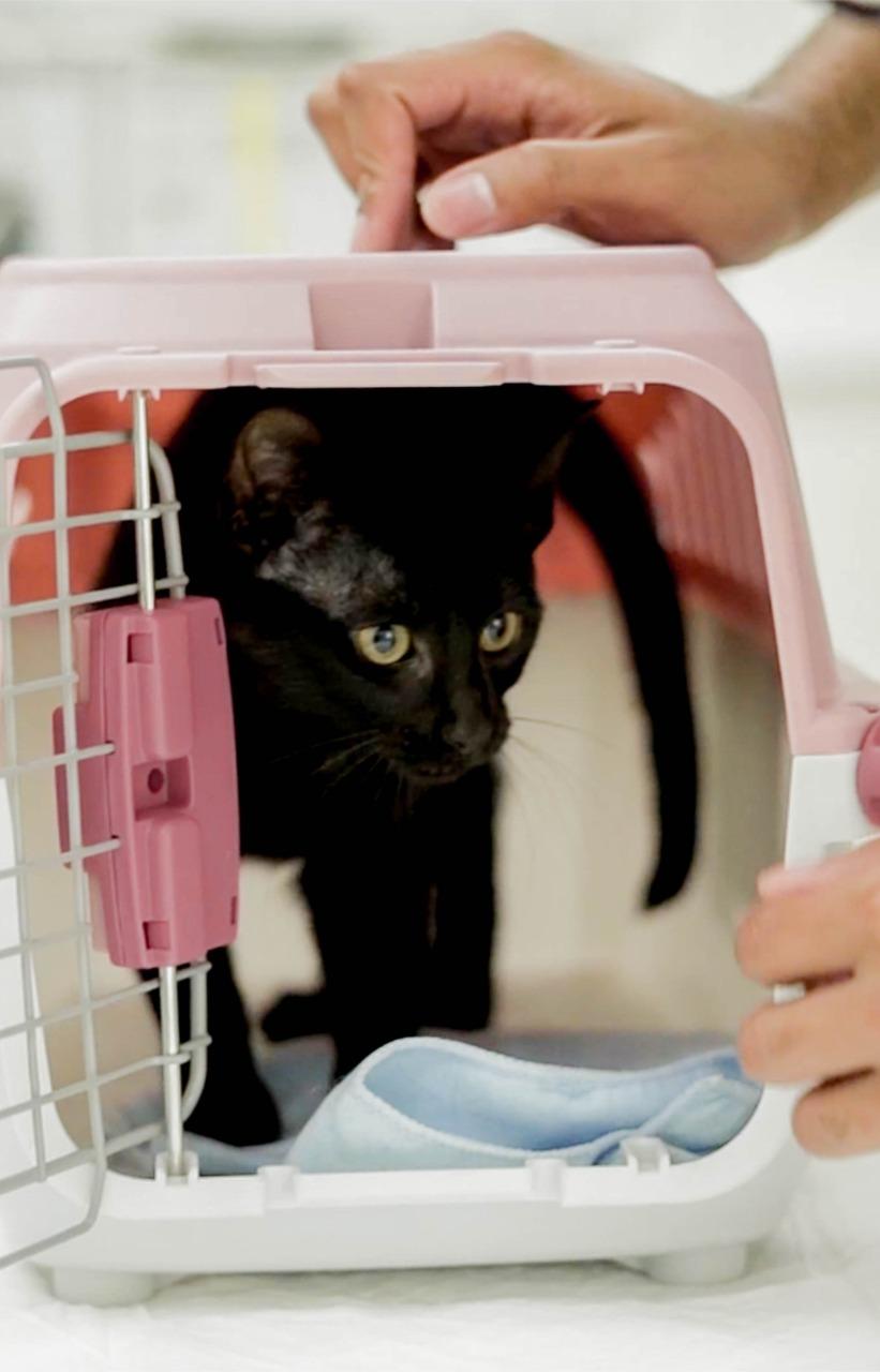 whatsapp image 2021 08 11 at 10 27 01 - Como é a castração de cães e gatos no Pet Care?