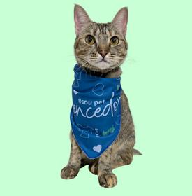 vencedor - FiV e FeLV: câncer em gatos